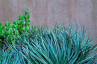 A detail of a succulent and cactus