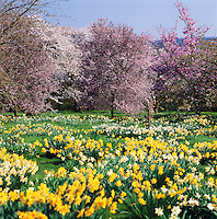 Great Britain, England, Hampshire: Landscape in Spring | Grossbritannien, England, Hampshire: Fruehling im Sueden Englands