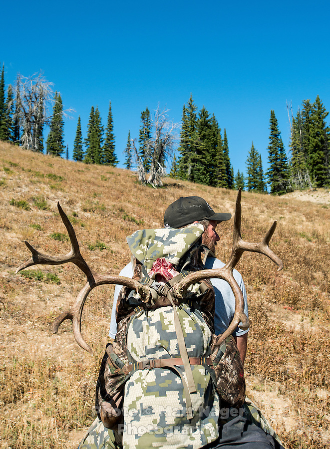 Guide Greg Kriese with Trefren Outfitters on Greyback Ridge with the antlers of a recently killed deer in the Hoeback Drainage of Wyoming Region H, outside of Alpine, Wyoming, September 23, 2015.<br /> <br /> Photo by Matt Nager