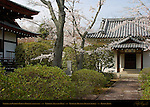 Garden, Sakura, Ryokai Sacred Site, Tahoden Treasure Hall, Tenryuji Heavenly Dragon Temple, Kyoto, Japan