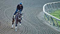 BALTIMORE, MD - MAY 17: Always Dreaming exercises in preparation for the Preakness Stakes this Saturday at Pimlico Race Course on May 17, 2017 in Baltimore, Maryland.(Photo by Scott Serio/Eclipse Sportswire/Getty Images)
