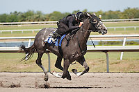 #81Fasig-Tipton Florida Sale,Under Tack Show. Palm Meadows Florida 03-23-2012 Arron Haggart/Eclipse Sportswire.