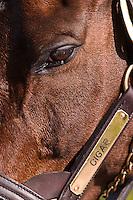 World famous thoroughbred race horse Cigar, Kentucky Horse Park, Lexington, Kentucky