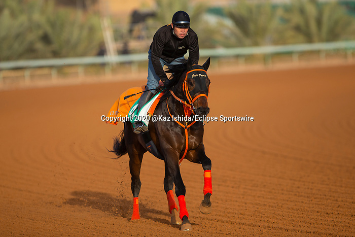 RIYADH,SAUDI ARABIA-FEB 27: Gold Dream excercises for Saudi Cup at King Abdulaziz Racetrack on February 28,2020 in Riyadh,Saudi Arabia. Kaz Ishida/Eclipse Sportswire/CSM