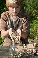 Seife aus Kastanien, Kastanienseife, Kastanien-Seife, Kind, Junge macht aus den Früchten der Rosskastanie Seife, die geschälten und zerkleinerten Kastanien werden in ein Glas getan und dieses mit Wasser aufgefüllt, die Saponine der Früchte dienen als Waschsubstanz, Gewöhnliche Rosskastanie, Roßkastanie, Reife Früchte, Ross-Kastanie, Roß-Kastanie, Kastanie, Aesculus hippocastanum, Horse Chestnut, Marronnier d`Inde