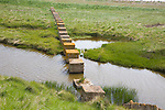Concrete block tank traps from the second world war cross coastal marshes at Alderton, Suffolk, England