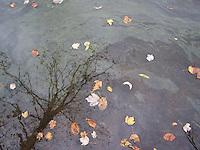Photos taken at Congers Lake Park