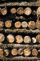 Europe/France/Centre/41/Loir-et-Cher/Sologne/Env Loreux: Bois coupé