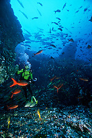 Scuba diver observing Fish schooling near Dirty Rock, off Cocos Island, Costa Rica. Model Released.