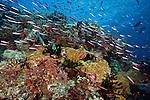 Coral reef, Fiji