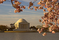 Jefferson Memorial framed by cherry blossoms shortly after sunrise, Washington, DC