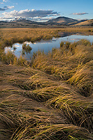 Yellowstone National Park, Wyoming:<br /> Patterns of aurtumn grasses at Swan Lake Flats under dawn colored sky