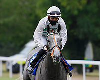 Alpinista ridden by Ryan Tate goes down to the start  of The British Stallion Studs EBF Upavon Fillies' Stakes  during Horse Racing at Salisbury Racecourse on 13th August 2020