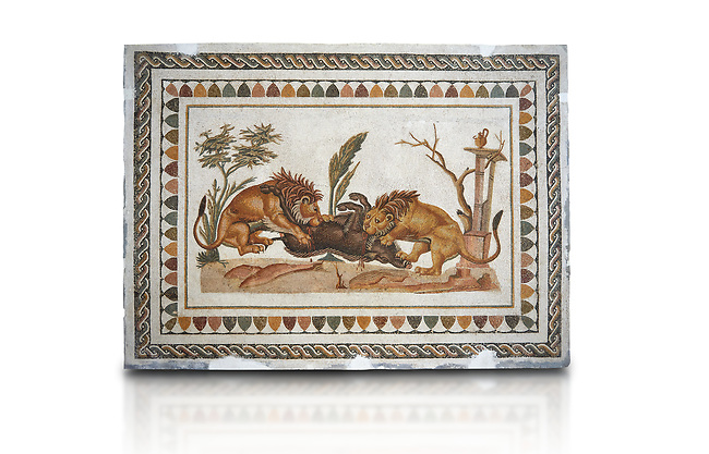 Picture of a Roman mosaics design depicting Lions eating a boar, from the ancient Roman city of Thysdrus. 2nd century AD, House of the Dionysus Proccession. El Djem Archaeological Museum, El Djem, Tunisia. Against a white background