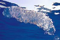 unidentified egg mass, off Kona Coast, Big Island, Hawaii, Pacific Ocean