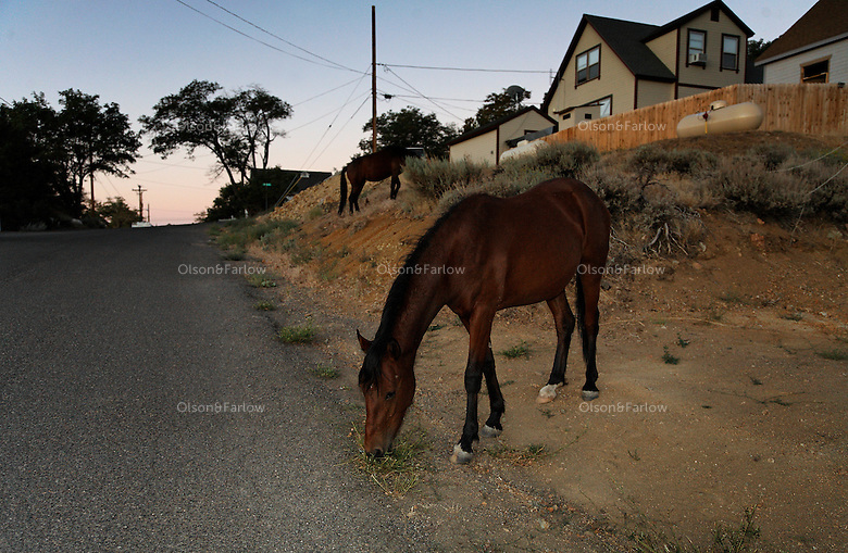 Wild horses wander through yards in the Virginia City.  Residents complained and they will be moved back to nearby Virginia Highlands by Mike Holmes State range estray manager.  They are lured by more vegetation in town in such a dry year.