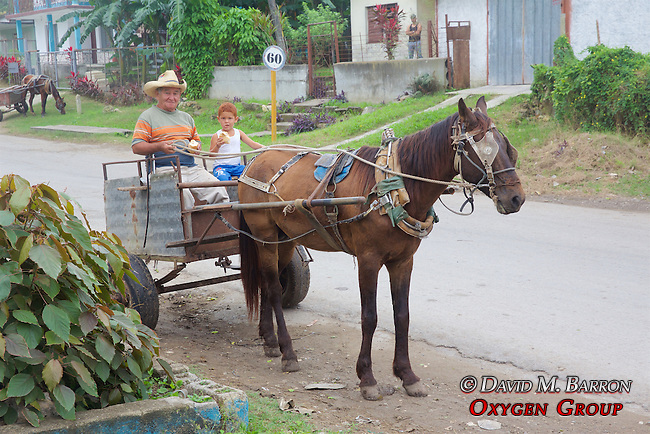 Grandfather and Grandson In Horse and Cart