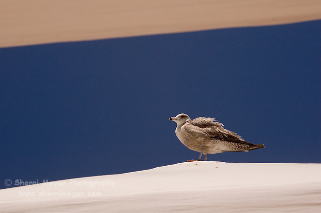 Seagull perched on top of a beach canopy, Cabo San Lucas, Baja California, Mexico