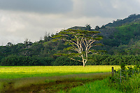 Pastoral scene, Koloa, Kauai
