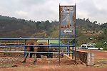 CAMBODIA  -  APRIL 5, 2005:  The elephants at the Tekchhou Zoo search for anything to eat on April 5th, 2005 near Kampot, Cambodia.  (PHOTOGRAPH BY MICHAEL NAGLE).
