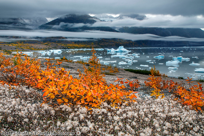 Fall landscape of willows and ice bergs in Inner Lake George with Colony Glacier in background and fog in front of Chugach Mountains.  Southcentral, Alaska<br /> <br /> Photo by Jeff Schultz/SchultzPhoto.com  (C) 2018  ALL RIGHTS RESERVED<br /> <br /> 2018 Bears, Glaciers and Fall Colors Photo tour/workshop