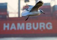 Moewe fliegt auf Hamburg: DEUTSCHLAND, HAMBURG, (GERMANY), 18.02.2015:  Moewe fliegt auf Hamburg, Symbolbild Hamburger Hafen, Hamburg als Schrift,