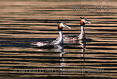 Carl, ANIMALS, wildlife, photos(SWLA3861,#A#)