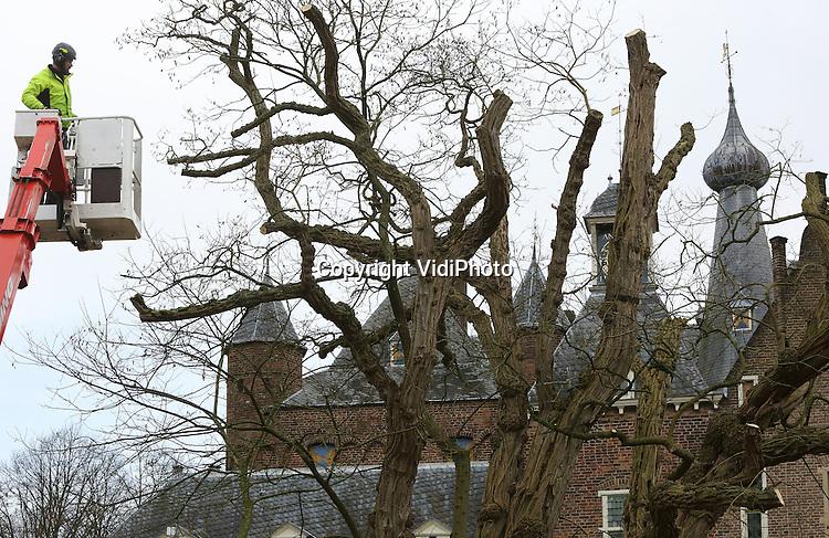 Foto: VidiPhoto<br /> <br /> DOORWERTH - Boomspecialisten van boomverzorger ABL in Ede, maken de dikste en oudste acacia Robinia pseudoacacia van West-Europa maandag zo'n 1000 kilo lichter. Zo'n 340 jaar geleden werd de boom geplant op het binnenplein van kasteel Doorwerth (Gld). Daar staat het nu nog steeds. De grillige gevormde acacia overleefde zelfs granaatbeschietingen in de Tweede Wereldoorlog. Het kasteel lag in 1944 de frontlinie. Volgens eigenaar Henk Abbink van ABL kan de boom nog zeker 100 jaar mee, mits goed onderhouden en regelmatig gesnoeid. Om scheef groeien en te zware takken te voorkomen, moet om de paar jaar met name de kruin flink uitgedund worden. Onder de wereldberoemde boom lopen jaarlijks duizenden bezoekers. Het snoeihout wordt door eigenaar Gelders Landschap verkocht aan liefhebbers. Omdat de boom uit 1676 dateert is daar veel belangstelling voor.