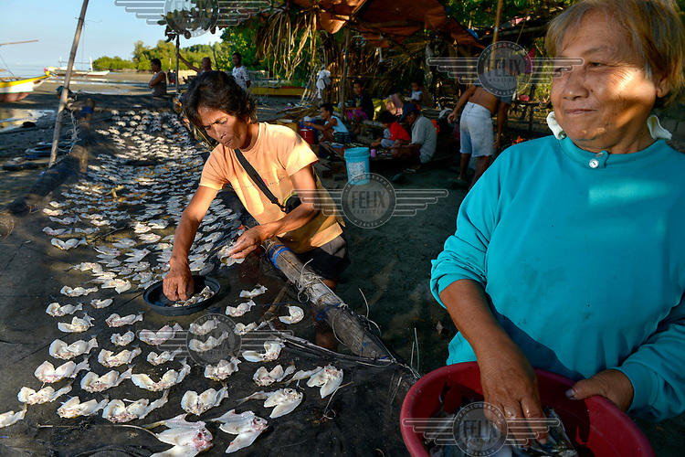 Women lay out small fish to dry on racks in Masinloc. The small port is a base for fishermen and trawlers working the Scarborough Shoals, around 100 miles out to sea. However the reefs have been occupied by the Chinese who are warning off fishing boats which are now forced to work in less productive waters.