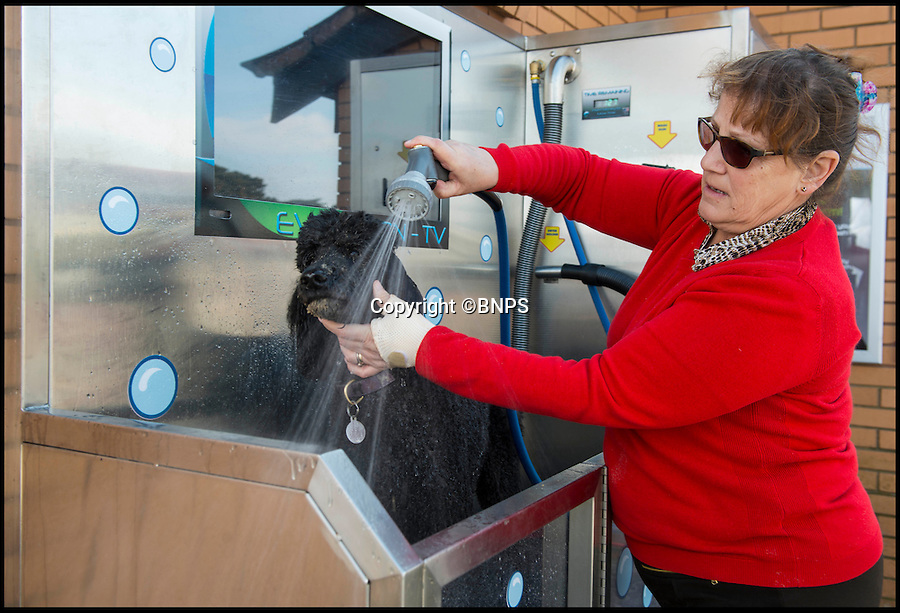 BNPS.co.uk (01202 558833)<br /> Pic: TomWren/BNPS<br /> <br /> Jane Fletcher(63) gives her 9-year-old Standard Poodle Mottoe a much needed rinse after a day at the beach.<br /> <br /> Doggy style...<br /> <br /> A state-of-the-art coin operated dog wash that can turn a dirty mutt into a pampered pooch in minutes has been set up on a British beach for the first time.<br /> <br /> The Evolution Dog Wash is already proving a hit with dog walkers since it was introduced in the posh Sandbanks area of Poole, Dorset, a week ago.<br /> <br /> It allows owners to achieve 'pawfection'  and give their pets the full services of a professional groomer for the cost of a couple of pounds.<br /> <br /> The self-contained unit is made from 'aircraft grade' stainless steel and has the ability to rinse, shampoo, condition, de-flea and blow-dry a canine companion.