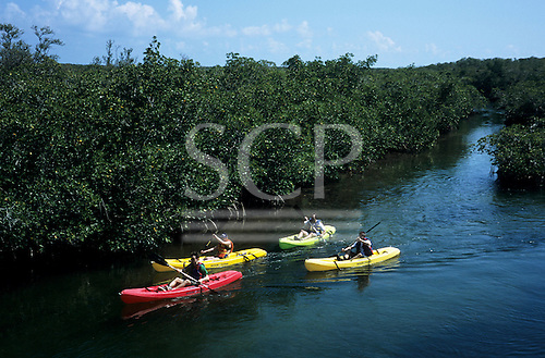 Florida, USA. Four brightly coloured sea kayaks being paddled through mangrove forest in Pennekamp State Park, Key Largo.