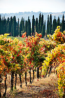 Vineyards in the Chianti region of Tuscany, Italy
