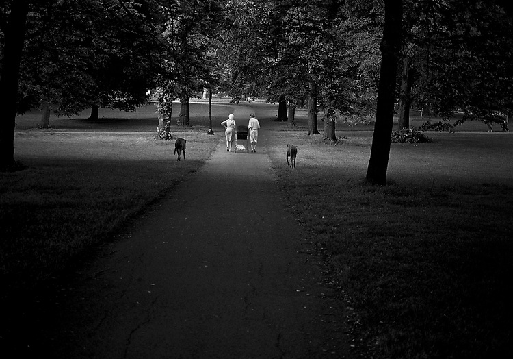 Two women walking in a park with two large dogs and a pushchair