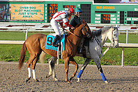 January 17, 2015:  Top Decile (KY) with Mike E Smith in the Silverbulletday Stakes at the New Orleans Fairgrounds course. Steve Dalmado/ESW/CSM