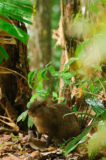 &quot;El invierno fugaz vino a conocerla.<br /> <br /> Prendado de su ternura.<br /> <br /> A entregarle su silencio y olores de tierra&quot;.<br /> <br /> <br /> Una princesa en la lluvia / Parque Nacional Camino de Cruces, Panam&aacute;.<br /> <br /> EDICI&Oacute;N LIMITADA (50)