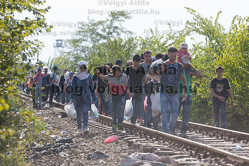 Last wave of illegal migrants cross the border between Serbia and Hungary before the last opening is closed near Roszke (about 174 km South of capital city Budapest), Hungary on September 14, 2015. ATTILA VOLGYI