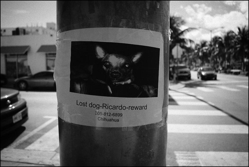 Lost dog Ricardo reward<br /> From &quot;Miami in Black and White&quot; series. Miami Beach, 2009