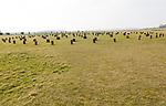 Woodhenge neolithic prehistoric henge site, near Amesbury, Wiltshire, England, UK