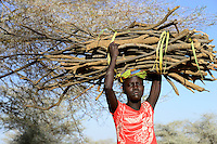 KENYA Turkana, Turkana woman carry firewoods which is used as cooking fuel / KENIA Turkana, Lodwar, Turkana Dorf Kaitese, junge Frau traegt Feuerholz