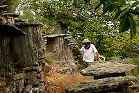 "A Cevennes apiculturist with his smoker inspects a trunk apiary located at the heart of a chestnut grove. These ancient sedentary beehives called ""bruscs"", are dug out in chestnut trees and covered in slate slabs. This type of hives was used until World War II."