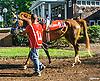 RB Frynch Broad The Buzz Brauninger Arabian Distaff (grade 1) at Delaware Park on 9/2/16