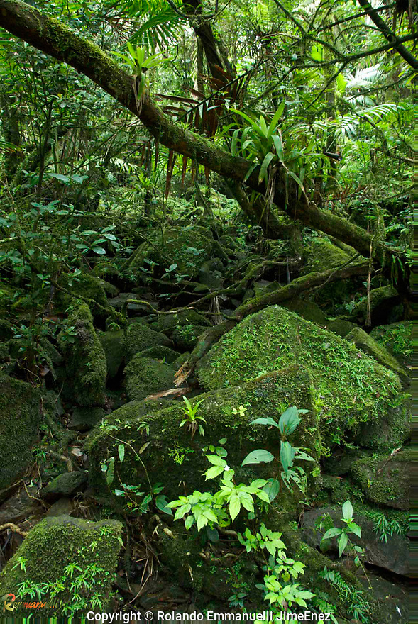 El Yunque, Puerto Rico. #landscapephotography #fotografiaopaisajes #elyunque #tropicalforest #puertorico #remmanuelli <br />