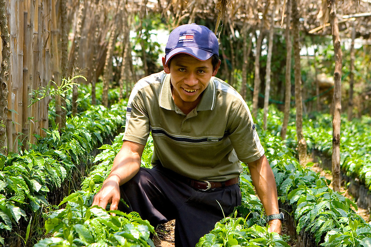 Portrait of Guatemalan man with his shaded coffee plants in San Juan La Laguna, Lake Atitlan, Guatemala
