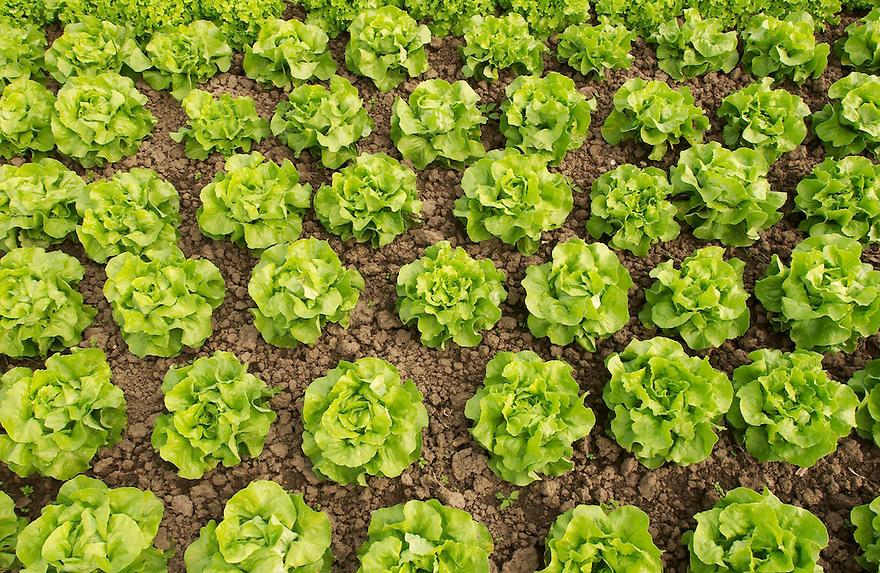 sla.agriculture, .landbouw, tuinbouw.bd, biologisch, biological