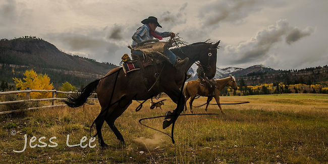 Bucking horse with cowboy Cowboy, Cowboy and Cowgirl photographs of western ranches working with horses and cattle by western cowboy photographer Jess Lee. Photographing ranches big and small in Wyoming,Montana,Idaho,Oregon,Colorado,Nevada,Arizona,Utah,New Mexico.