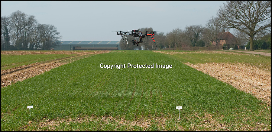 BNPS.co.uk (01202 558833)<br /> Pic: PhilYeomans/BNPS<br /> <br /> Spy in the sky.<br /> <br /> Drone technolgy now reaches down to the farm.<br /> <br /> Plucky British scientists have come up with an ingenious way of surveying hundreds of acres of crops - by employing a 25,000 pounds drone helicopter used to film Hollywood movies.<br /> <br /> The cutting-edge custom-built gizmo, known as an octocopter, flies low over 800 acres of wheat fields taking measurements that help researchers better understand how crops grow.<br /> <br /> It can collect the same amount of information in a five-minute flight than a team of staff would collect in a day.<br /> <br /> A relatively recent invention, drone helicopters are more commonly seen on movie sets where they are used to film aerial shots.<br /> <br /> But the carbon fibre eight-rotor copter is now being put to work by boffins at Rothamsted Research, the longest running agricultural research station in the world.