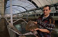 Europe/France/Pays de la Loire/85/Vendée/Ile de Noirmoutier: Aquaculture - Francis Turbot de l'élevage de Turbots [AUTORISATION N°54]