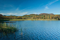 Loch of the Lowes, Perthshire