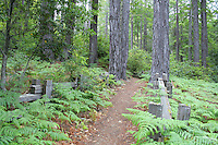 Trail in Kruse Rhododendron State Reserve Salt Point California