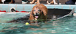 Local dogs hang out at the annual Pooch Plunge at the Carson Aquatics Facility, in Carson City, Nev., on Saturday, Sept. 28, 2013. <br /> Photo by Cathleen Allison